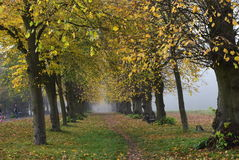 Camminata nella foresta fotografia stock libera da diritti