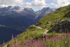 Camminata sul prato delle alpi Fotografie Stock