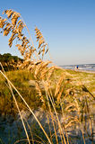 Camminata sulla spiaggia immagine stock