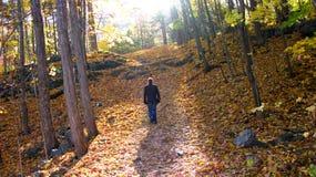Camminatore nella foresta di autunno Fotografie Stock