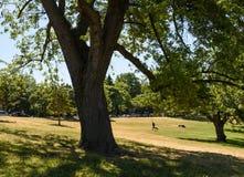 Camminatore solo nel parco del riverdale Immagine Stock