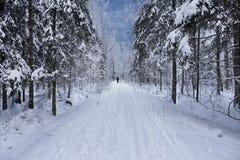 Cammini lungo la strada del parco in un bello giorno di inverno Immagini Stock Libere da Diritti