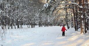 Cammini per sciare nel legno o nel parco Immagini Stock