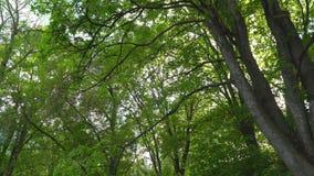 Cammini sotto gli alberi nel parco di Mosca video d archivio