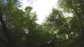 Cammini sotto gli alberi nel parco di Mosca stock footage