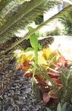 Cammuffamento dell'iguana Immagine Stock