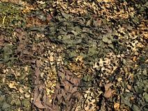 Camoflage Fotografia Stock Libera da Diritti