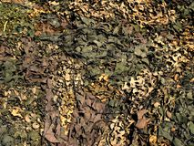 Camoflage Foto de Stock Royalty Free