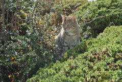 Camoflaged cat royalty free stock photos