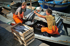 Camogli, Liguria, Itália - 15 de junho de 2015: Fishermans com uma captura Imagem de Stock Royalty Free