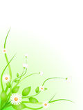 A camomila floresce a beira Fotos de Stock Royalty Free