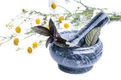 A camomila floresce em um almofariz isolado no branco Foto de Stock