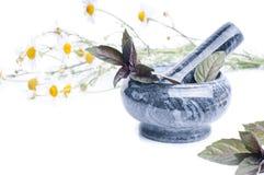 A camomila floresce em um almofariz isolado no branco Fotos de Stock