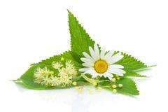 Camomila, folhas da provocação e flores do cal Foto de Stock Royalty Free