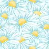 Camomila ou Daisy Seamless Vetora Pattern ilustração stock