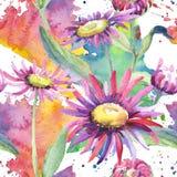 Camomila violeta Flor botânica floral Teste padrão selvagem do wildflower da folha da mola ilustração do vetor