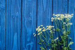 Camomile ανθοδέσμη για το θερινό σχέδιο στο μπλε ξύλινο γραφείων διάστημα άποψης υποβάθρου τοπ για το κείμενο Στοκ Φωτογραφίες
