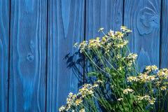 Camomile ανθοδέσμη για το θερινό σχέδιο στο μπλε ξύλινο γραφείων διάστημα άποψης υποβάθρου τοπ για το κείμενο Στοκ Εικόνες