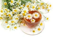 camomile βοτανικό τσάι Στοκ εικόνες με δικαίωμα ελεύθερης χρήσης