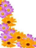 camomile διακοσμητικά λουλού&delt Στοκ Φωτογραφίες