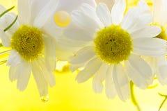 camomile λουτρών αφρός Στοκ εικόνες με δικαίωμα ελεύθερης χρήσης