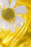 camomile λουτρών αφρός Στοκ Φωτογραφία