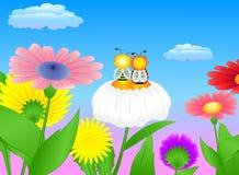 camomile μελισσών λιβάδι δύο Στοκ εικόνα με δικαίωμα ελεύθερης χρήσης
