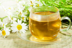 Camomile λουλουδιών (ox-eye μαργαρίτα) και τσάι Στοκ Εικόνα