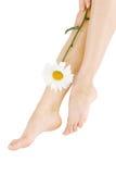 camomile πόδια προκλητικά Στοκ εικόνα με δικαίωμα ελεύθερης χρήσης