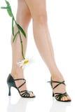 camomile πόδια προκλητικά Στοκ εικόνες με δικαίωμα ελεύθερης χρήσης