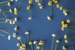 Camomile πλαίσιο σε ένα μπλε ξύλινο υπόβαθρο Στοκ φωτογραφίες με δικαίωμα ελεύθερης χρήσης