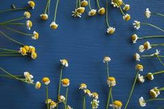 Camomile πλαίσιο σε ένα μπλε ξύλινο υπόβαθρο Στοκ Εικόνες