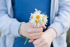 Camomile στα χέρια Στοκ εικόνες με δικαίωμα ελεύθερης χρήσης