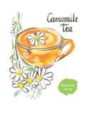 Camomile τσάι ελεύθερη απεικόνιση δικαιώματος