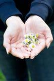 camomile χέρια Στοκ φωτογραφία με δικαίωμα ελεύθερης χρήσης