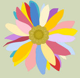Camomile. Colorful flower-camomille on green backgrond Royalty Free Illustration