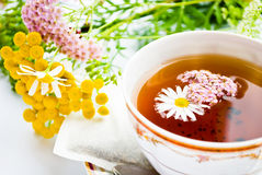 Camomile Royalty Free Stock Images