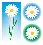 Camomile. The image of camomiles on blue and green background Stock Photos