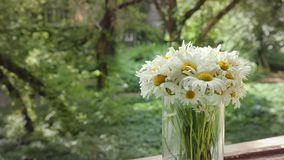 Camomile animation in the cinemagraph technics. White flowers in glass vase in a summer day on the background of the old. Park. Cinema graph HD footage, close stock video footage