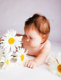 Camomile baby Stock Images