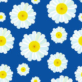 Camomile background Stock Photos