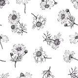Camomile background. Hand drawing. Black and white Royalty Free Stock Photography