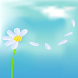 Camomile on blue background Royalty Free Stock Photography
