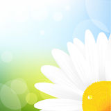 Camomile And Blue Sky. Vector Illustration Stock Photography