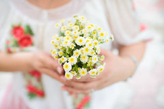 Camomile Bouquet Stock Photography