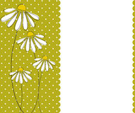 Camomile card Stock Photos
