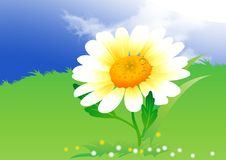 Camomile on clouds background Royalty Free Stock Photo
