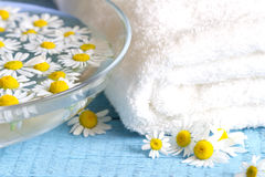 Camomile extract with towel on blue boards Stock Photography