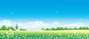 Camomile field. Forests insects blue sky Stock Photography
