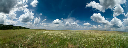 Camomile field with clouds. In sky Royalty Free Stock Photography